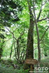 熊越えの滝(木1)