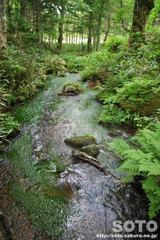 熊越えの滝(清流1)