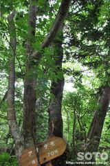 熊越えの滝(木2)