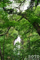 熊越えの滝(滝1)