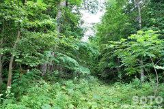 森に分け入る