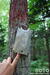 幹にめり込んだ標識