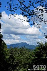 自然観察林(1)