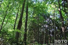 自然観察林(2)