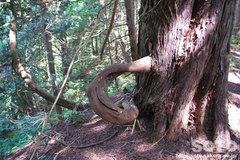 自然観察林(11)
