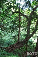 自然観察林(12)