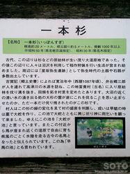一本杉水源公園(1)