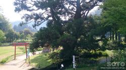 一本杉水源公園(2)