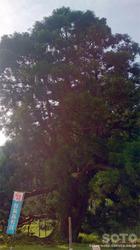 一本杉水源公園(3)