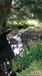 一本杉水源公園(5)