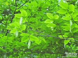 桜松公園(植物)