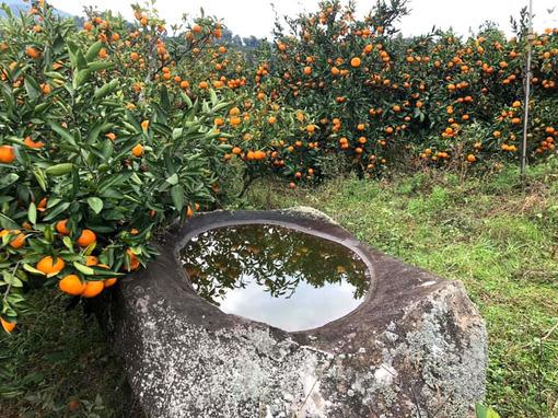池田農園(25)