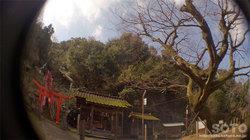 日奈久温泉(温泉神社 欅)
