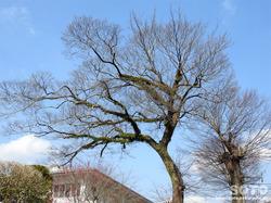 樹木(2)