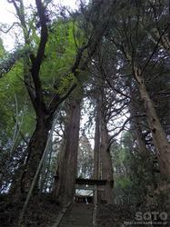 金比羅杉(2)