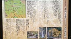 下城公孫樹(2)