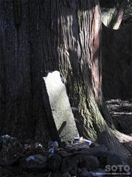高森殿の杉(石碑)