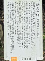 妙見の樟(2)