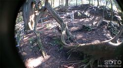 高森殿の杉(6)