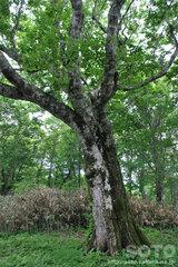 奥尻復興の森(マザーツリー?)