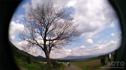 前原の一本桜(3)