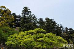 松江城(なんじゃもんじゃ)