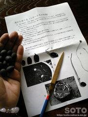 蓮の種(1)