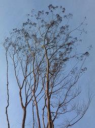 樹木(枝振り)