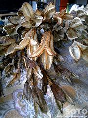 花殻(1)