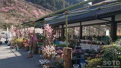 木の花ガルテン