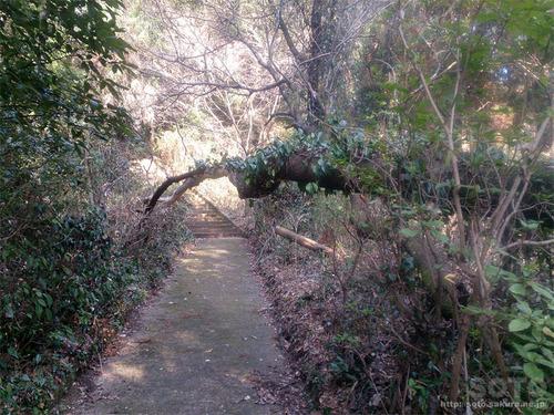 菊池神社から雲上宮へ(参道)