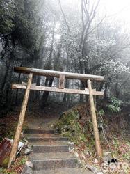 山伏師さまの逆さ杉(1)