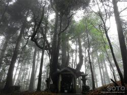 山伏師さまの逆さ杉(2)