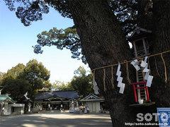 加藤神社(ご神木?)