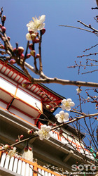 高橋稲荷神社(8)