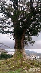 津江神社(10)