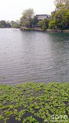 浮島神社(5)