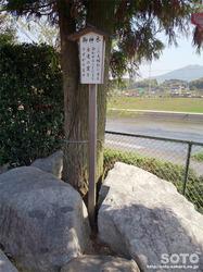 出雲神社(4)