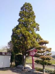 出雲神社(5)