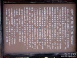 徹然桜(4)