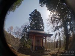 徹然桜(6)