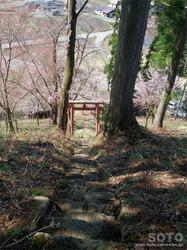 徹然桜(8)