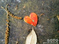 香椎宮(ハート形の葉っぱ)