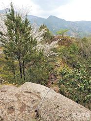 岩屋神社(馬の首根岩)