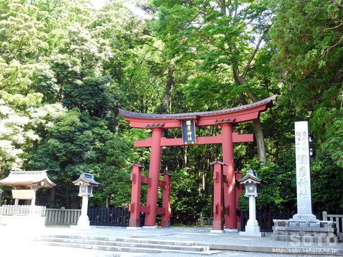 弥彦神社(大鳥居)