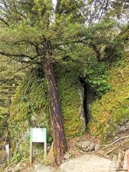 岩屋神社(針の耳)