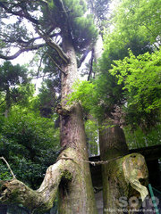 龍王神社(20110808_05)