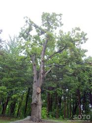 上川神社(13)