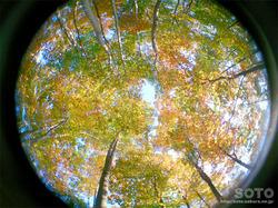 空気神社(樹々)