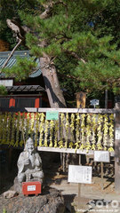二荒山神社(4)